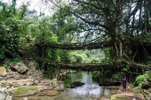 Cherrapunji, India is famous for its live bridges