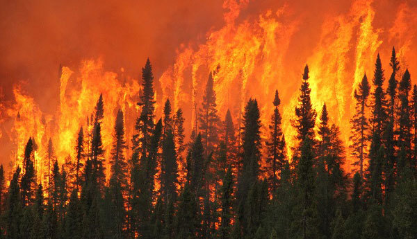 Forest fires are very hard to put out because they spread so quickly