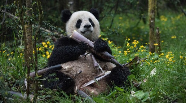 Love that bamboo!