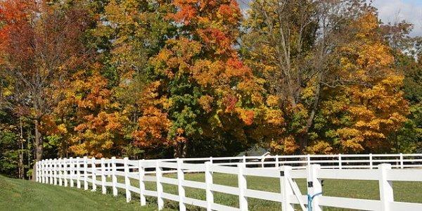 Feature feature autumn in michigan