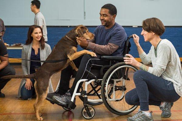 Bella befriends veterans at the hospital