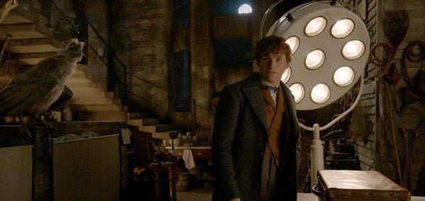 Newt in his basement