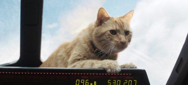 Cat Goose who is really an alien Flerken