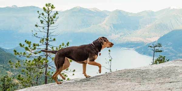 A Dog's Way Home Blu-ray Review – Sweet Story and Fun Bonus Features
