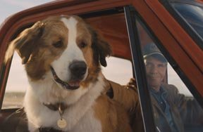 Preview a dogs journey movie review pre