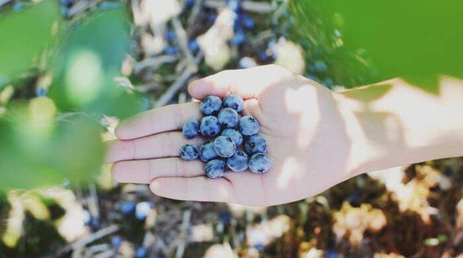 Go berry picking.  In-season berries taste the best