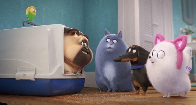 Chloe and friends teach Gidget to be a cat