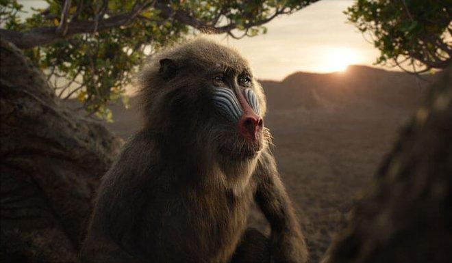 Rafiki wisely advises Simba