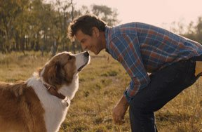 Preview a dogs journey blu ray pre