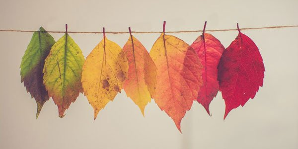 Feature fall leaves chaning color feat